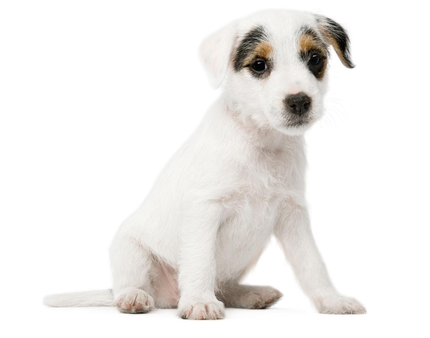 Dogs to Heal - Johannesburg